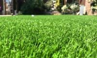 Savanna Artificial Grass 2018