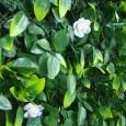 Summer extendable artificial hedging